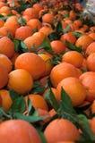 Un tas des oranges Images stock