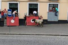 Un taureau de remplissage effraye des spectateurs Photos libres de droits