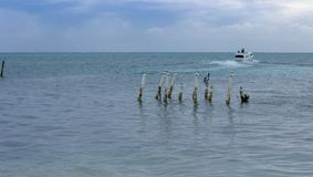 Un taxi de l'eau part matoir de Caye, Belize Photos stock
