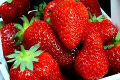 Un tazón de fuente blanco de fresas. Foto de archivo libre de regalías