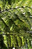 Un tejado de las hojas del helecho Fotos de archivo