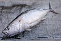 Un thon de freah à vendre sur un marché de nourriture de pêcheurs dans Raro Image stock