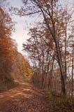 Un throgh del camino de tierra de la bobina el bosque de la caída Fotografía de archivo