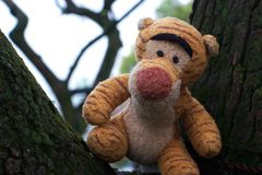 Un tigre en el árbol fotografía de archivo libre de regalías