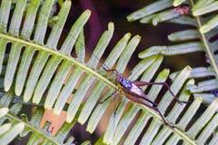 Un tipo di grilli dal Gryllidae della famiglia fotografia stock