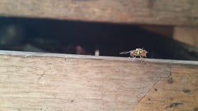 Un tipo di insetto che consuma l'altro sangue animale è alimento fotografia stock libera da diritti