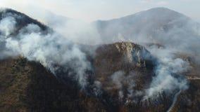 Un tiro aéreo móvil del humo grueso en el bosque que cubre el área entera almacen de video