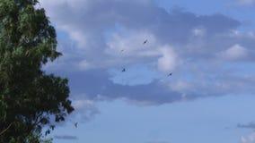 Un tiro de águilas en el cielo almacen de metraje de vídeo