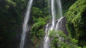 Un tiro de la cascada exótica hermosa con los pájaros en el medio de las selvas metrajes