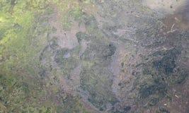 Un tiro de la copia de seguridad grotesca de las aguas residuales fotografía de archivo libre de regalías