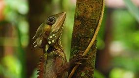 Un tiro de la iguana en árbol metrajes