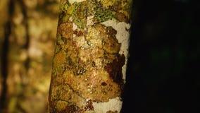 Un tiro de una corteza de árbol almacen de video