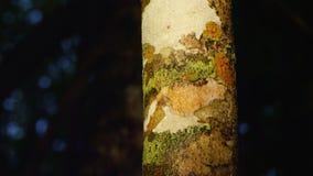 Un tiro de una corteza de árbol con la araña metrajes