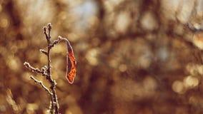 Un tiro hermoso de la naturaleza con puesta del sol Foto de una lente vieja con un fondo borroso y colorido hermoso Fotos de archivo libres de regalías