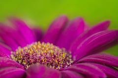 Un tiro macro de la flor púrpura Imagenes de archivo