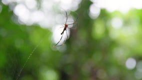 Un tiro macro de una araña que mueve encendido el web almacen de metraje de vídeo