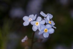 Un tiro macro de una pequeña flor púrpura Fotografía de archivo libre de regalías