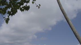 Un tiro rural escénico metrajes