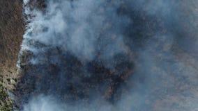 Un tiro vertical aéreo que muestra el bosque en humo grueso almacen de video
