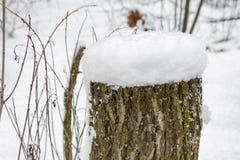 Un tocón cubierto con nieve en bosque del invierno Fotos de archivo libres de regalías