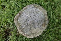 Un tocón de árbol en el bosque con la hierba fotos de archivo