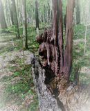 Un tocón de árbol putrefacto siente bien a un monstruo, un duende, un duende, pirata si los remiendos de la luz y de la sombra cr Foto de archivo libre de regalías