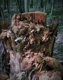 Un tocón de árbol putrefacto siente bien a un monstruo, un duende, un duende, pirata si los remiendos de la luz y de la sombra cr Imágenes de archivo libres de regalías