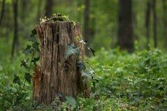 Un tocón en un bosque verde imagenes de archivo