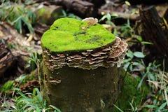 Un tocón fungoso Fotografía de archivo libre de regalías