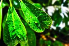 Un tocco di verde e di Sun Fotografie Stock