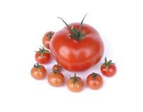 Un tomate con los pequeños tomates aislados en blanco Imágenes de archivo libres de regalías