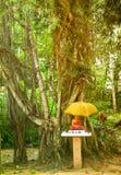 Un tombeau de Bouddha sous un arbre de Bothi photographie stock libre de droits