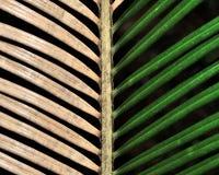Un toque de color Imagen de archivo libre de regalías