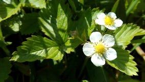 Un toque de primavera Foto de archivo libre de regalías