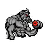 Un toro enojado fuerte con un barbell Foto de archivo libre de regalías