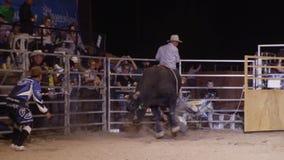 Un toro negro con un tiro del jinete almacen de metraje de vídeo
