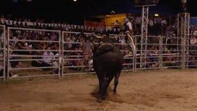 Un toro nero con il colpo della folla archivi video