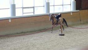 Un tour d'homme montant un cheval sur l'arène Homme faisant des cascades à cheval Homme montant un mensonge de cheval clips vidéos