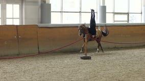 Un tour et une voûte d'équitation d'homme sur le cheval Un homme montant un cheval à l'envers clips vidéos