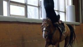 Un tour et une voûte d'équitation d'homme sur le cheval Un homme montant un cheval à l'envers banque de vidéos