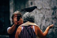 Un touriste avec des bandes d'un pigeon pour la caméra à La Havane, Cuba photos libres de droits