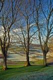 Un trío de árboles Imagen de archivo libre de regalías