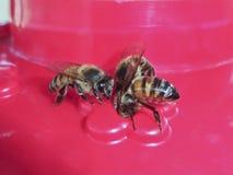 Un trío de Honey Bees en un alimentador Imagen de archivo