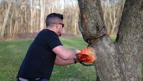 Un trabajador corta peligroso en un árbol con la motosierra mientras que bajo rama grande ALT2 metrajes