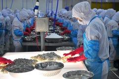 Un trabajador está comprobando los camarones procesados color para saber si hay exportar en una fábrica de los mariscos en Vietna Fotografía de archivo libre de regalías