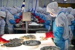 Un trabajador está comprobando los camarones procesados color para saber si hay exportar en una fábrica de los mariscos en Vietna Fotos de archivo