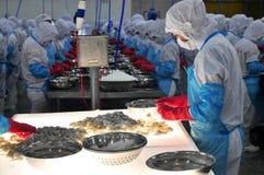Un trabajador está comprobando los camarones procesados color para saber si hay exportar en una fábrica de los mariscos en Vietna Imagen de archivo
