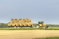 Un tractor mueve las balas de heno desde un campo de trigo en un remolque después de cosechar fotografía de archivo libre de regalías