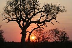 Un tramonto africano Fotografia Stock Libera da Diritti