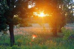 Un tramonto di estate nella campagna immagini stock